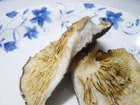 20061025kinoko03.jpg