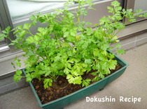 20090608hg_04italianparsley.jpg