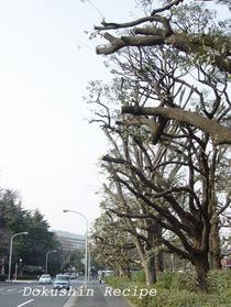 20080505cuttrees.jpg