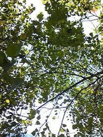20080909camp_green.jpg